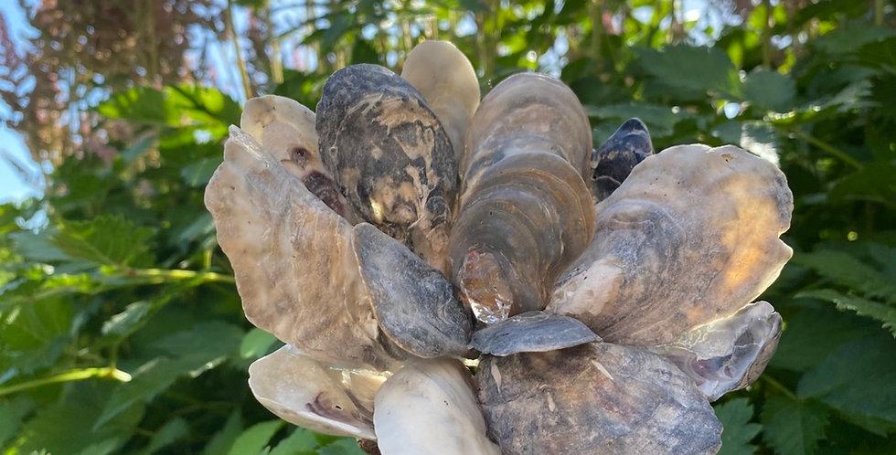 Herkimer Diamond Seashell Flower