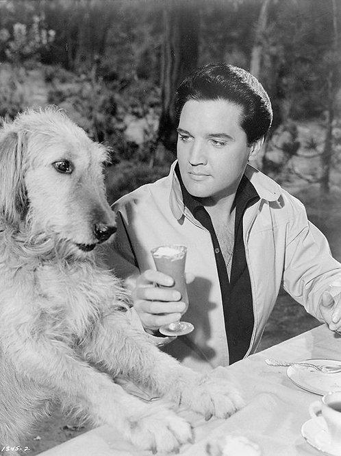 "Elvis  ""Ain't Nothing but a HoundDog"" Artisan Doggie Ice Cream"