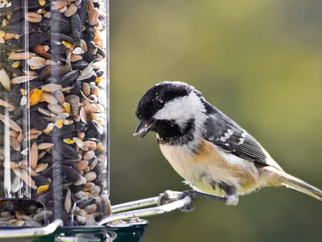 Ups & Downs: Shrinking birds, record temperatures, and fluctuating water levels