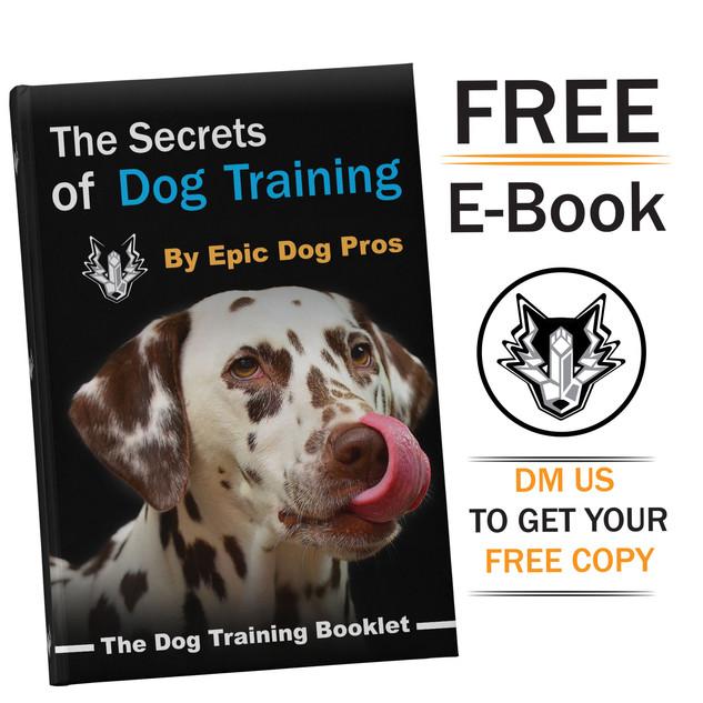 E-Book Advetisement
