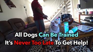 Dog Training Advertisement