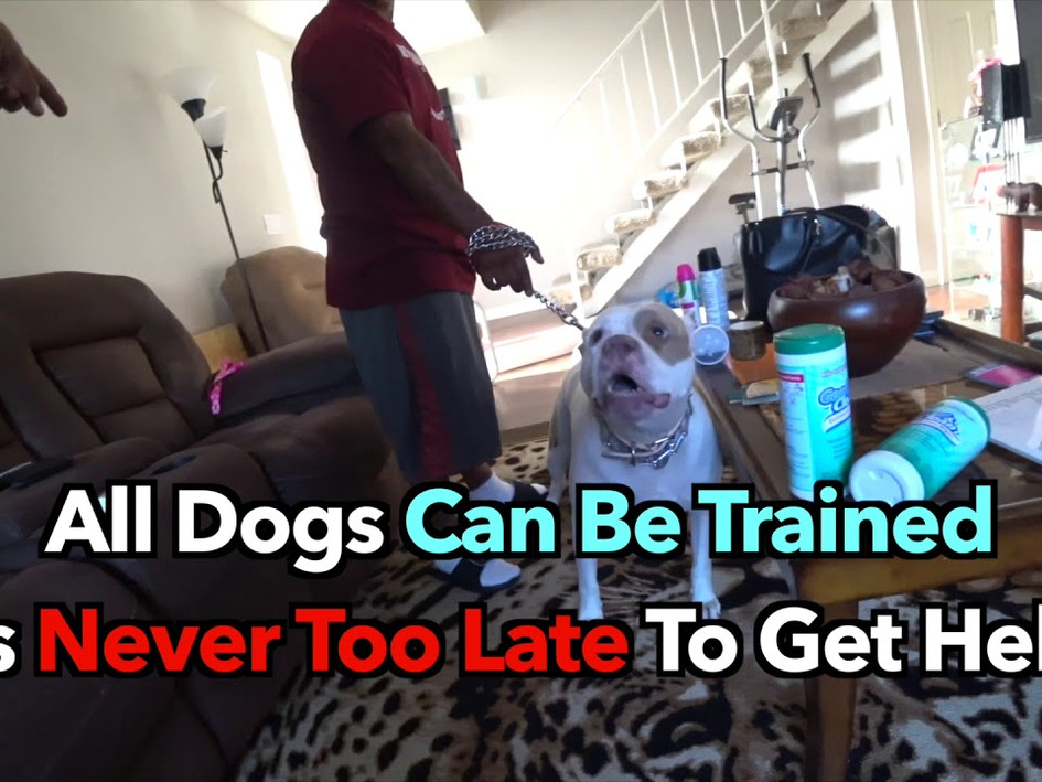 Dog Training Advertisement