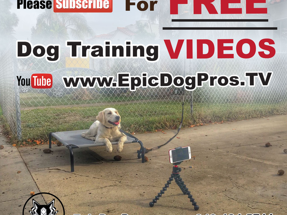 Promotional Video for Epic Dog Pros
