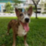 www.petwalker.sg dog walking and sitting