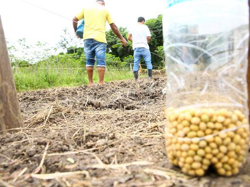 Itaguaí participa de experimento pioneiro com soja verde