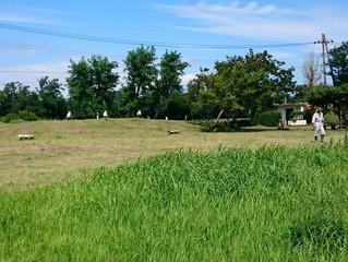 町内鴨が池公園草刈り