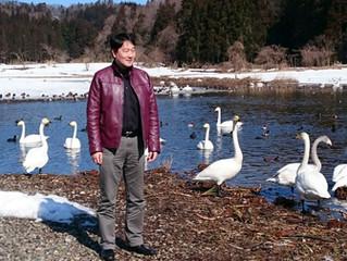 西山町の大池の白鳥