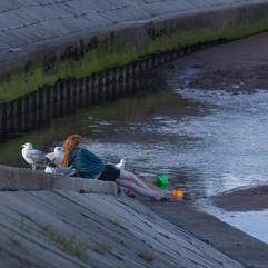 Gulls for company