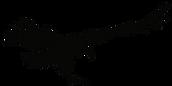 condors-logo-bird-charcoal_edited.png