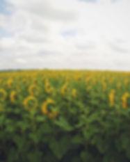 Flower field on a farm