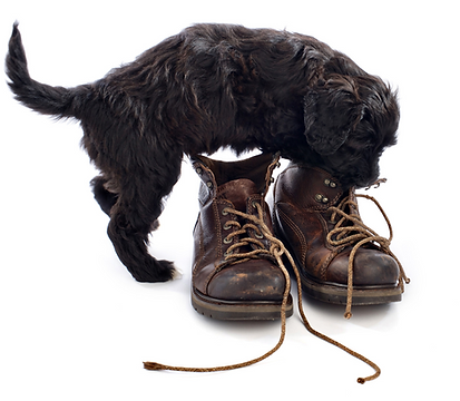 womens-boot-repair-puppy-dog-ate-my-boots