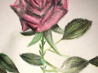 Une rose et ses épines