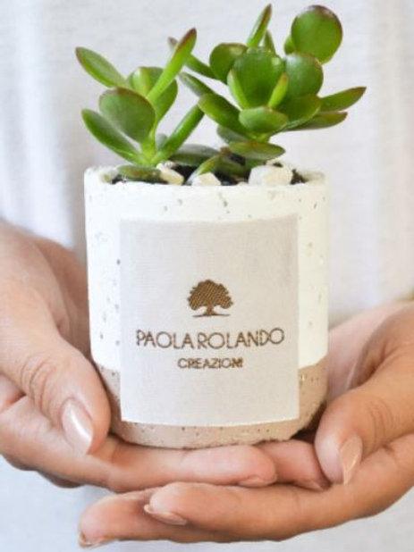 PAOLA ROLANDO CREAZIONI Piantina Grassa linea Flora - Cappuccino