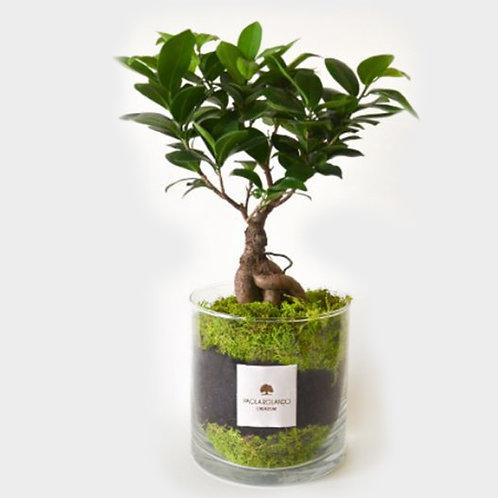 PAOLA ROLANDO CREAZIONI Amazzonia cilindro bonsai