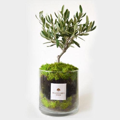 PAOLA ROLANDO CREAZIONI Amazzonia cilindro olivo