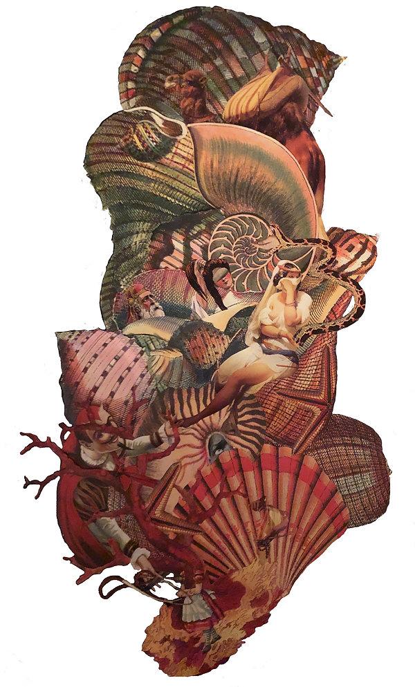 Fortunate Shell, Inas Al-soqi