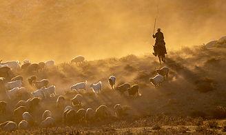 herdsman 5.jpg