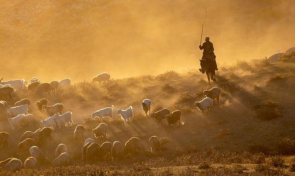 herdsman 5, Dong Dai