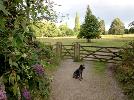 Moss's walk in dog friendly Parke, the National Trust Estate