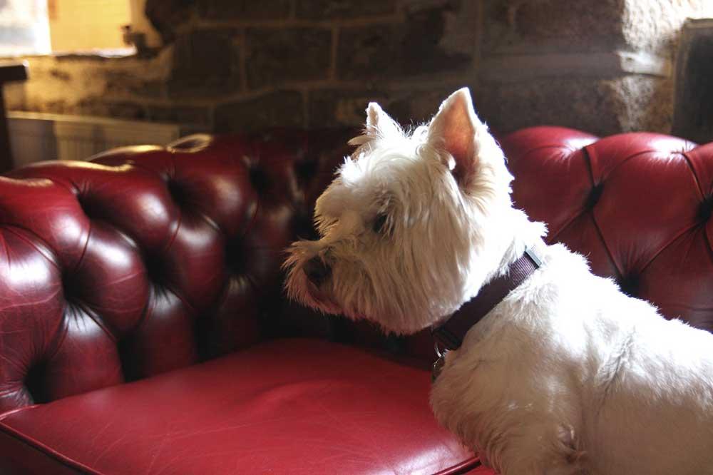 Poppy the pub dog