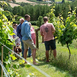 Alder Vineyard Tours