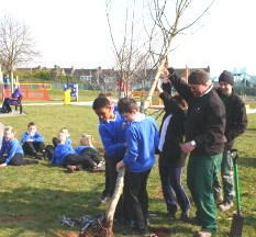 Cause for great celebrations - Tree planting