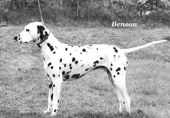 benson-black-and-white.jpg