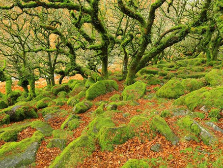 Autumn... when things get wild and spooky on Dartmoor!