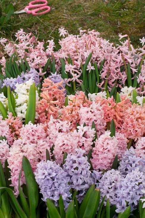 flower subscriptions glasgow