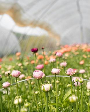 flower farm scotland