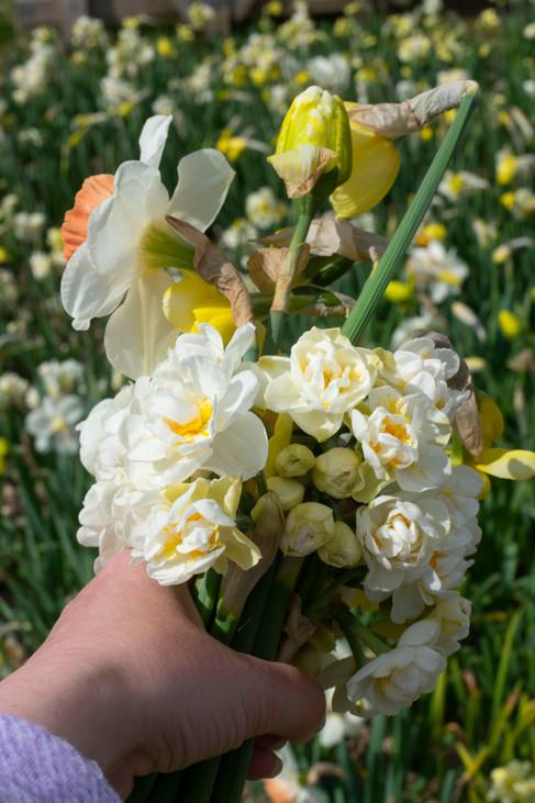 flower farm glasgow