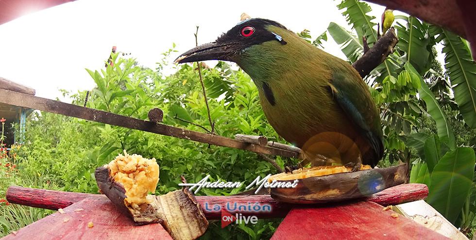 The most representative bird of our farm