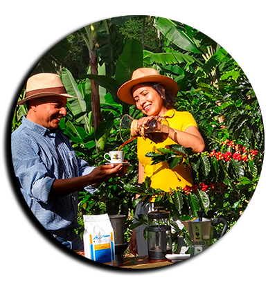 Explore Coffee Process_From Tree to Cup