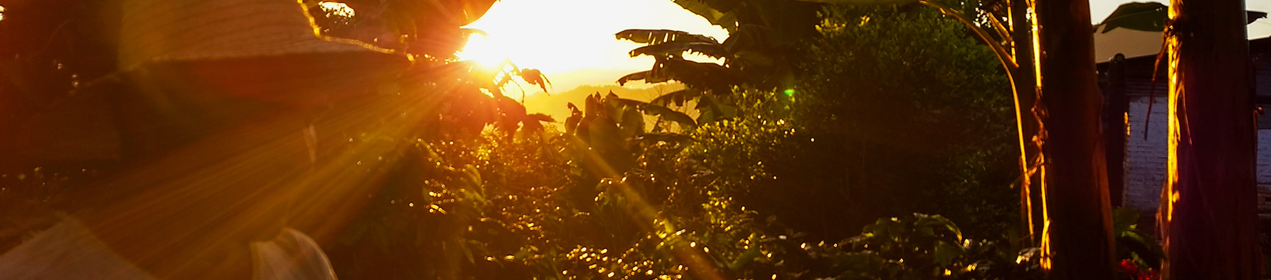 La Unión Coffee Farm
