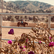 Feast California Ranch Pop Up Dnner