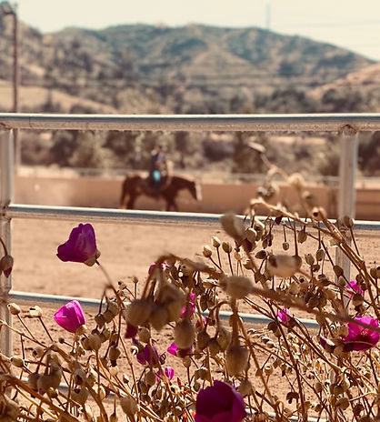 Feast California Horse Ranch Venue