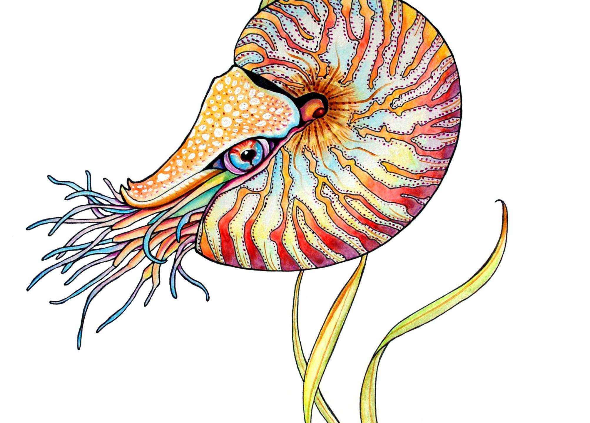 Nautilus Edited