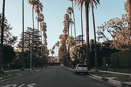Los Angeles pal tree-lined street