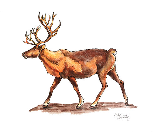 Reindeer Greeting Card