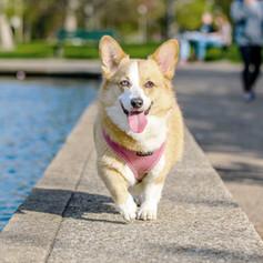 Medium Dog Outdoor Play