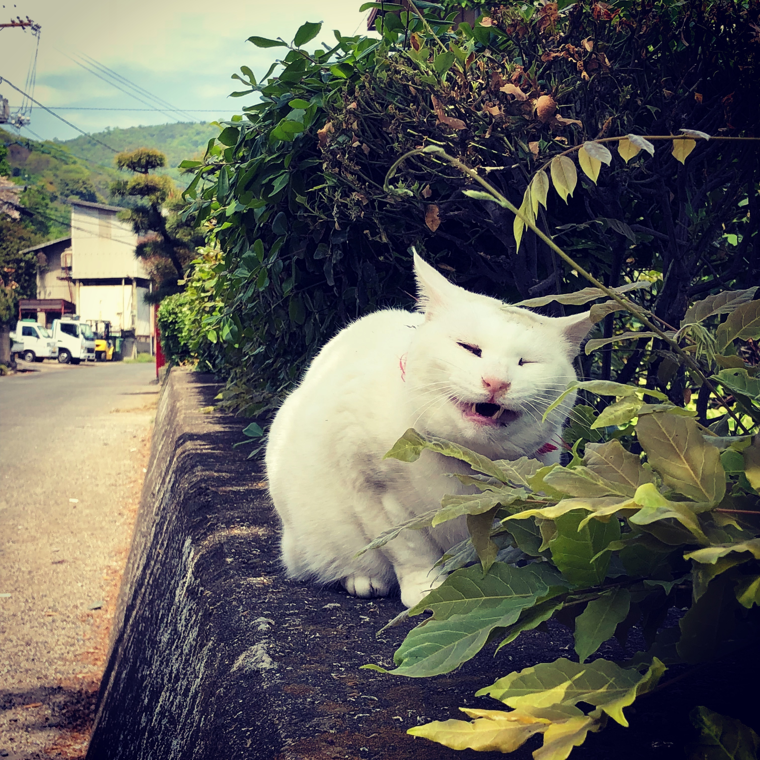 岡山の風景