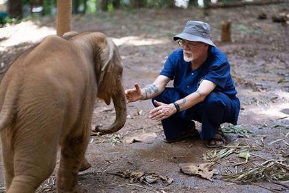 Rescued: A Promising Future for Elephants