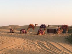 מסע למדבר הקסום של הודו
