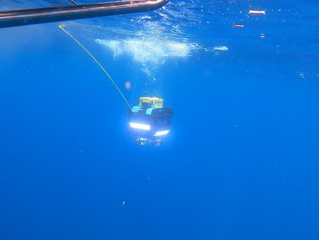 駆逐艦「蕨」「葦」水中調査を実施しました。