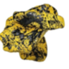 #oiseaux #jaune #noir #🎄.jpg