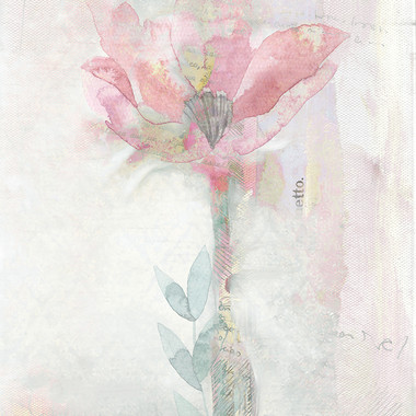 Blush Ranunculus Solitary