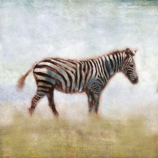 Serengeti Series Zebra
