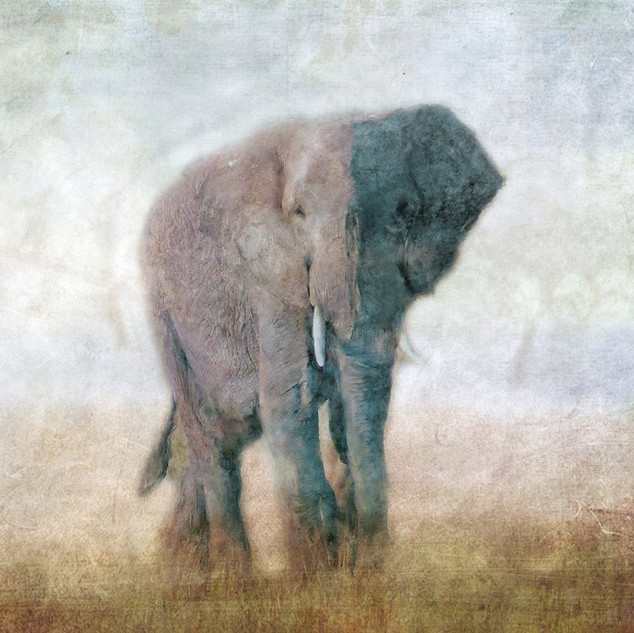 Serengeti Series Elephant