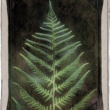 Vintage Fern Leaf