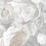 Wide Field of White Flowers